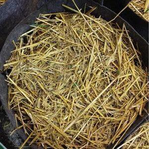 Buildasoil Barley straw mulch
