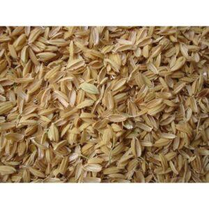 Rice Huls